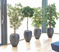 Artificial Plants & Pots