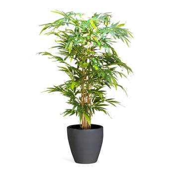 #en Bamboo tree, 150 cm, incl. black pot
