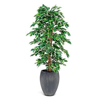 Synthetic Ficus plant with pot, H 1700 mm