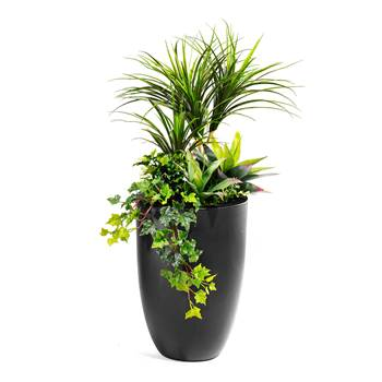 Plant arrangement with pot